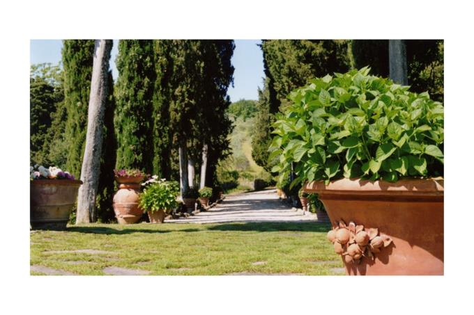 the main avenue of the XVII farmhouse for sale in Tuscany siena.jpg