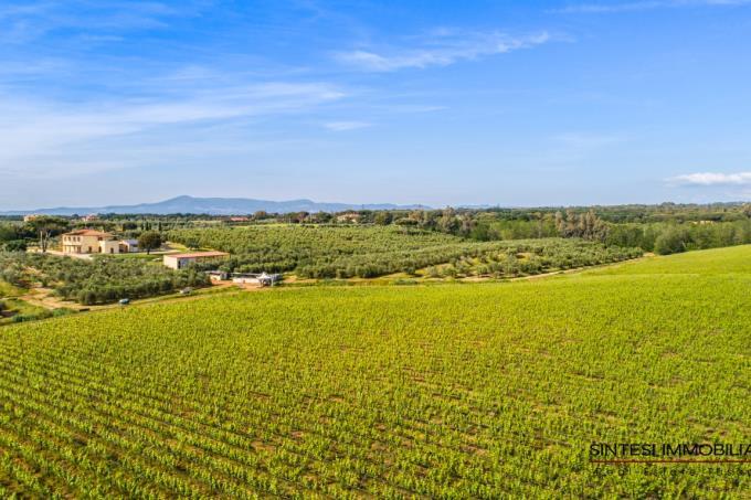 prestigiosa-fattoria-20-ha-con-vigneti-olivi-in-vendita-toscana-livorno-bibbona