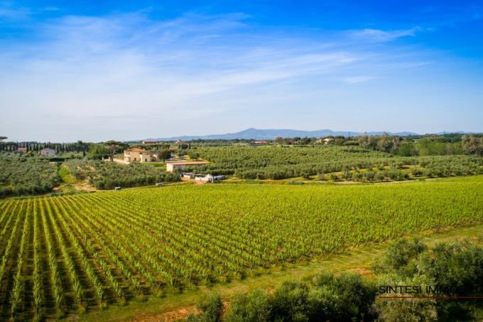 fattoria-20-ettari-in-vendita-toscana-livorno-vicino-bolgheri