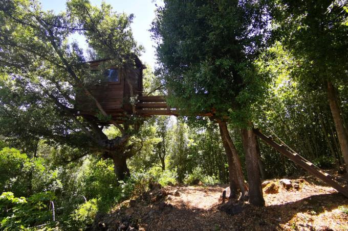 giardino-con-casa-sull'albero-rustico-in-vendita-toscana-livorno-castagneto-carducci