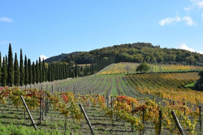 prestigiosa-tenuta-vitivinicola-vendita-toscana-siena