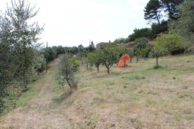 oliveta-casale-in-vendita-toscana-pisa-chianni