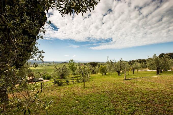oliveta-esclusiva-proprieta-vendita-toscana-bibbona
