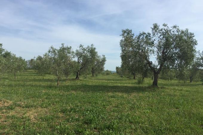 oliveta-prestigioso-casale-in-vendita-toscana-saturnia