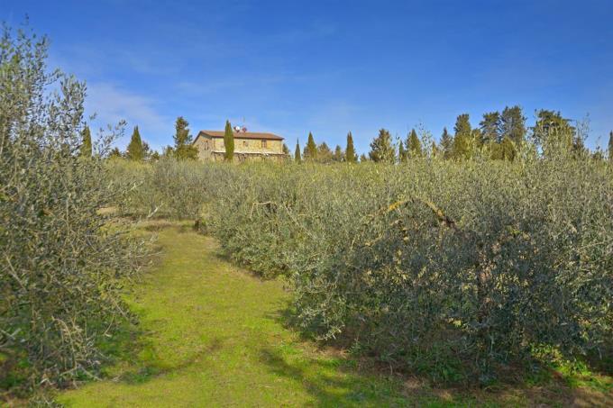 oliveta-rustico-ristrutturato-vicino-al-mare-in-vendita-toscana-livorno-bibbona