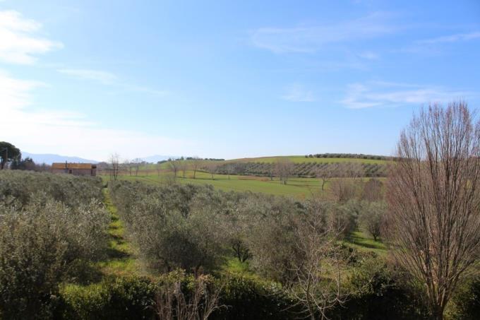oliveta-talamone