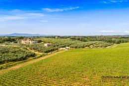 Fattoria con 2 casali  guesthouse 7 ha. di vigneto 3450 olivi in vendita Toscana | Livorno | Bibbona