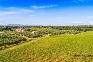 Fattoria con 2 casali  guesthouse 20 ha.,vigneto, 3450 olivi in vendita Toscana   Livorno   Bibbona