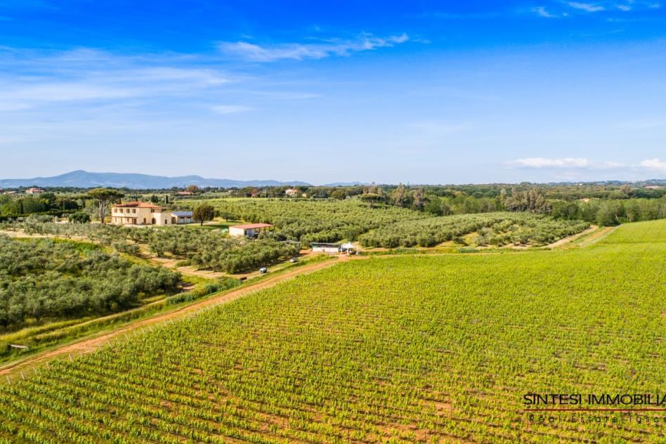 prestigiosa-fattoria-con-vigneti-olivi-in-vendita-toscana-livorno-bibbona