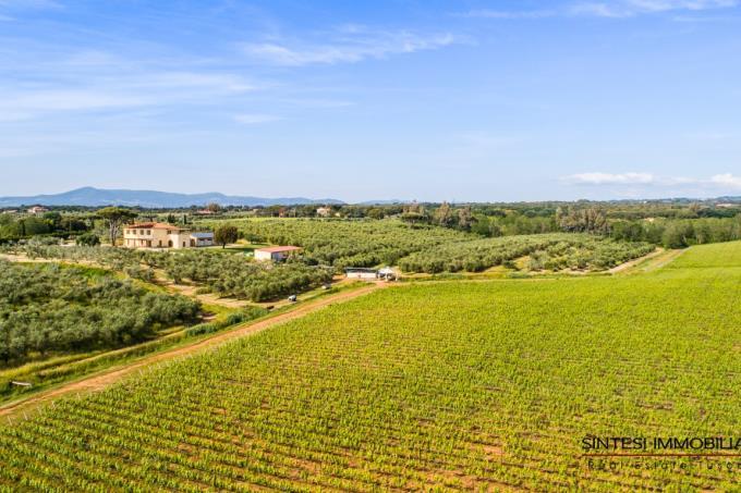 vigneti-oliveti-fattoria-in-vendita-toscana-livorno-bibbona
