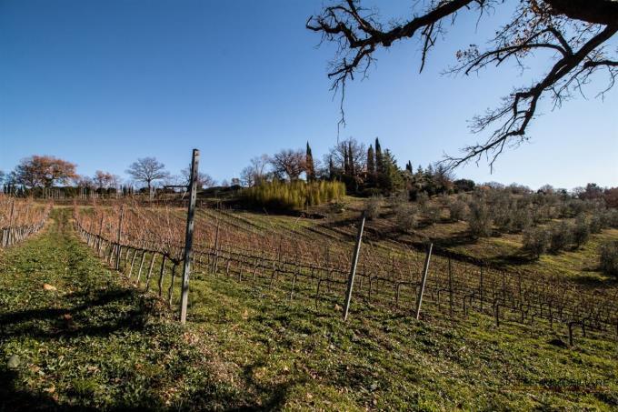 vigneto-villa-di-prestigio-in-vendita-toscana-grosseto-vicino-saturnia