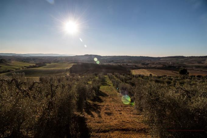 incredible-country-view-semidetached-farmhouse-for-sale-tuscany-marsiliana